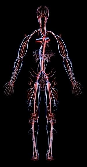 Utilizzo-delle-statine-nelle-Sindromi-Coronariche-Acute