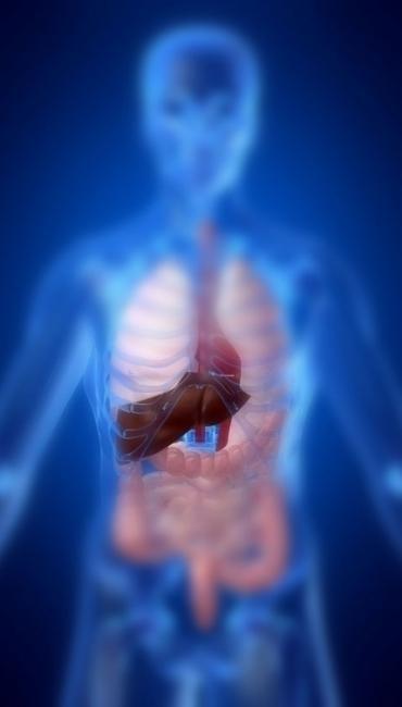 Se-il-fegato-e-sotto-pressione